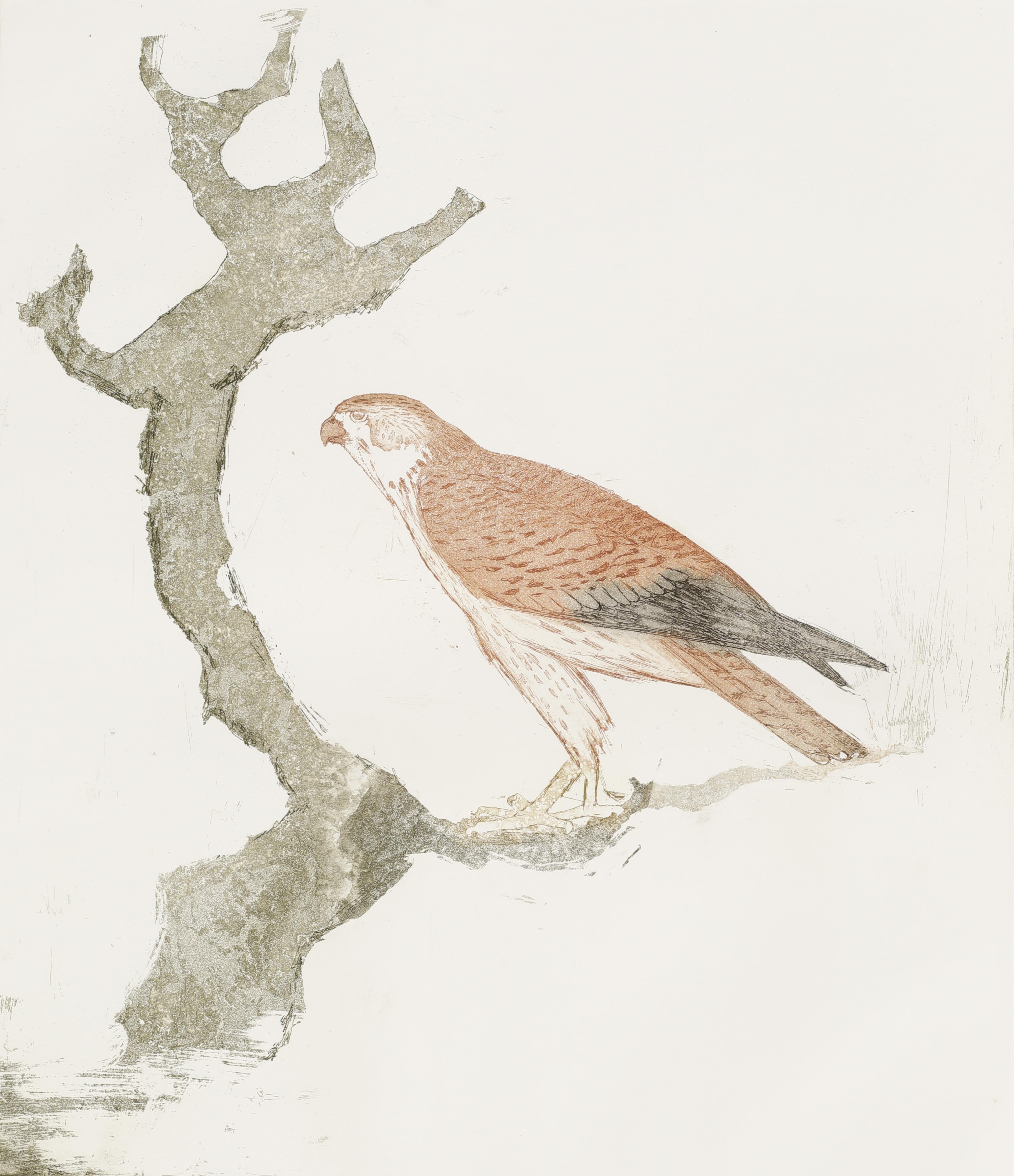 Elisabeth Frink. Kestrel, from Birds of Prey, 1974. Etching and aquatint on paper, 29/50.