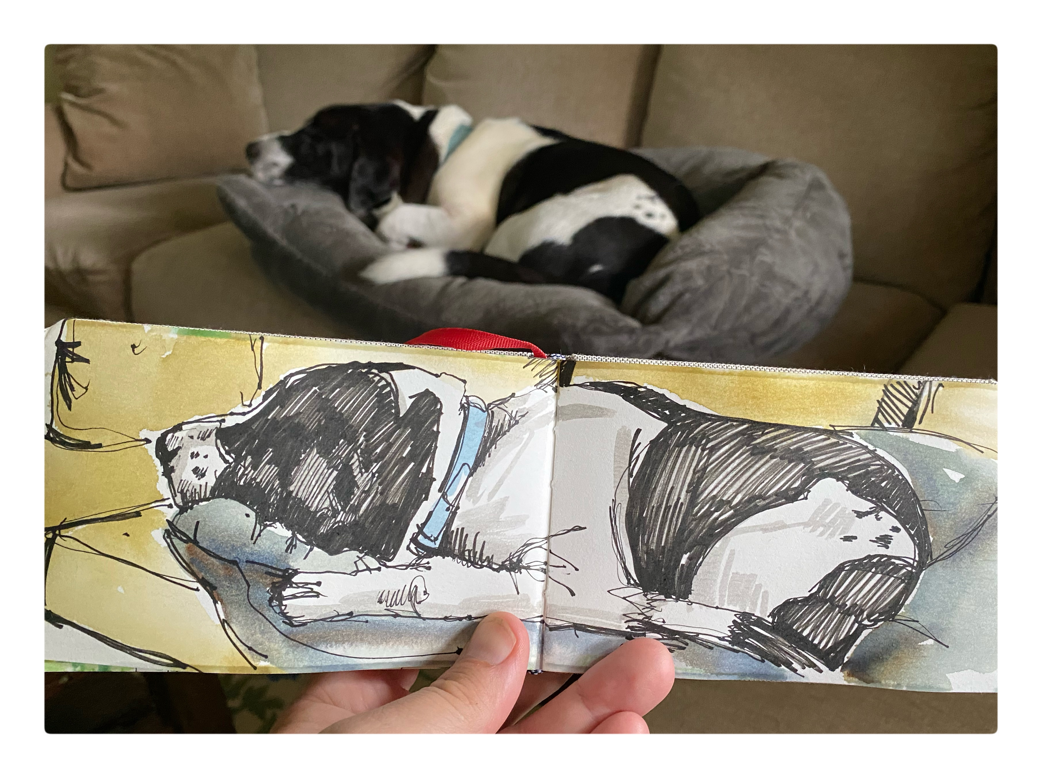photograph and sketch of a black and white dog