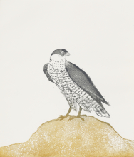 Elisabeth Frink. Peregrine Falcon, from Birds of Prey, 1974. Etching and aquatint on paper, 42/50